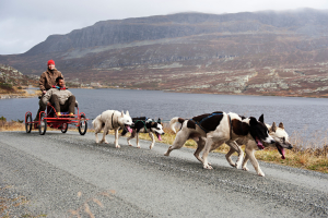 Dog-sledding-at-Beitostolen-122011-99-0014_2200